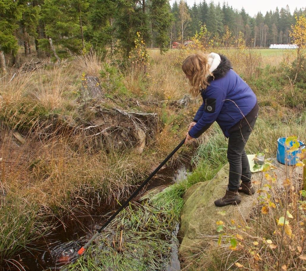 Heléne Annadotter tar prover i ett mörkt och humusrikt vatten i ett dike i norra delen av Immelns avrinningsområde. Provtagningspunkt P6411. Foto från rapport Hola Lake Immeln: Johan Forssblad.